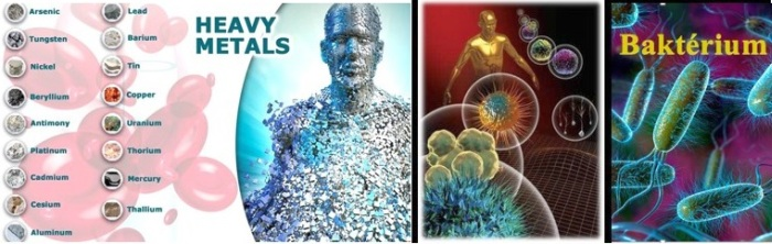 Nehézfémek - Baktériumok
