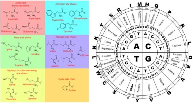Aminosavak - proteinek