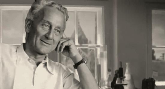 Szent-Györgyi Albert professzor