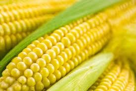 Ne kukoricázzunk!